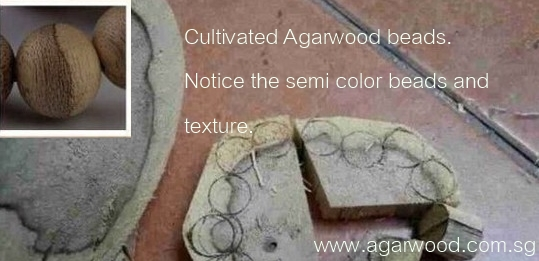 cultivated agarwood, cultivated agarwood beads